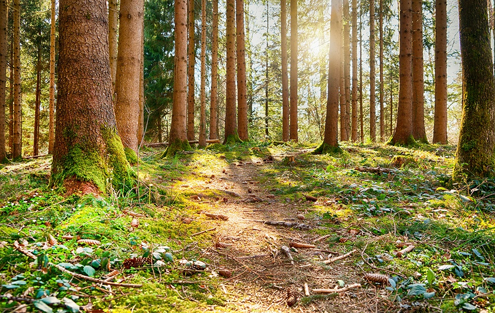 Waldflüstern